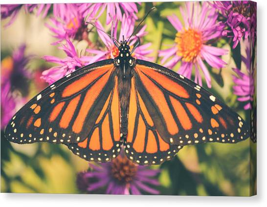 Grace And Beauty Canvas Print
