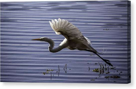 Grace In Motion Canvas Print