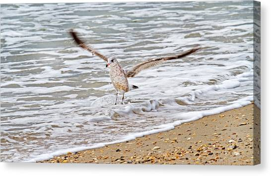 Gulls Canvas Print - Graceful Landing by Betsy Knapp