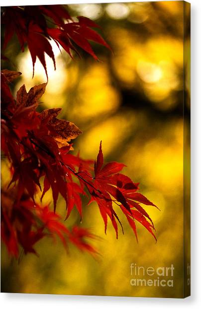 Ace Canvas Print - Graceful Leaves by Mike Reid