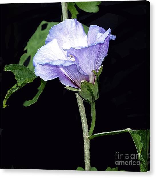 Graceful Purple Hollyhock Canvas Print