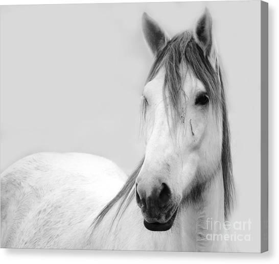 Lynda Dawson-youngclaus Canvas Print - Gracie Grey by Lynda Dawson-Youngclaus