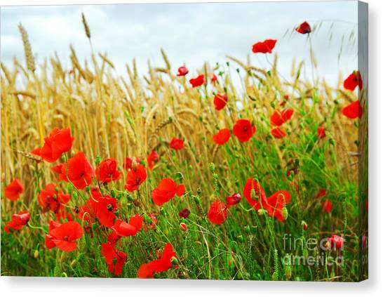 Field Canvas Print - Grain And Poppy Field by Elena Elisseeva