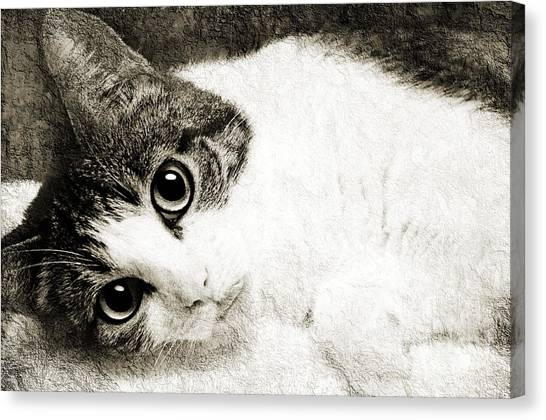 Andee Design Pet Canvas Print - Grammy Said I Could Bw by Andee Design