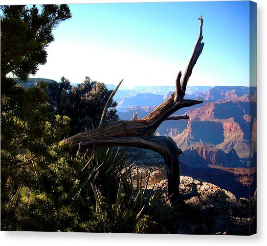 Grand Canyon Dead Tree Canvas Print