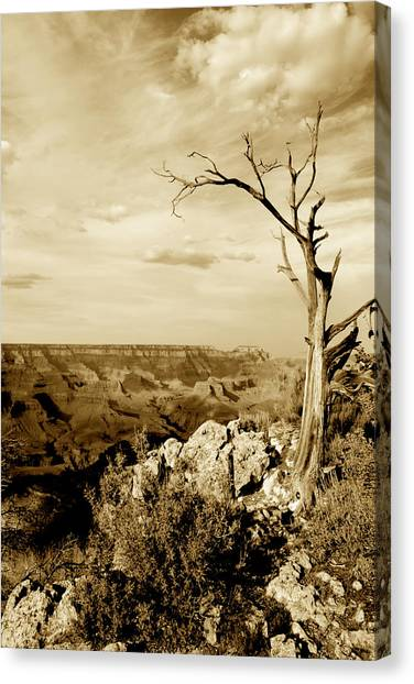 Grand Canyon Sepia Canvas Print by T C Brown
