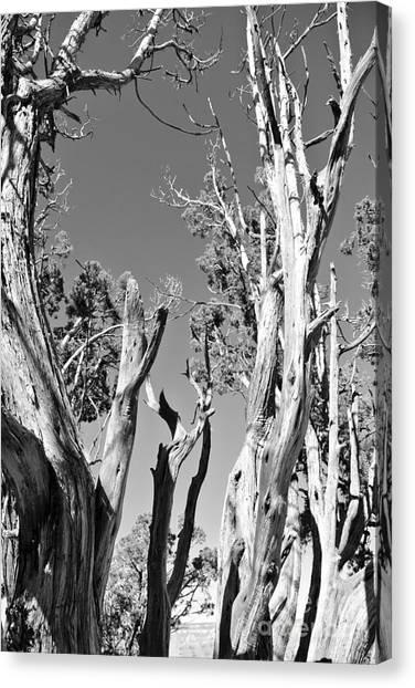 Grand Canyon Trees Canvas Print