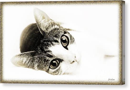 Andee Design Pets Canvas Print - Grand Kitty Cuteness 3 High Key by Andee Design