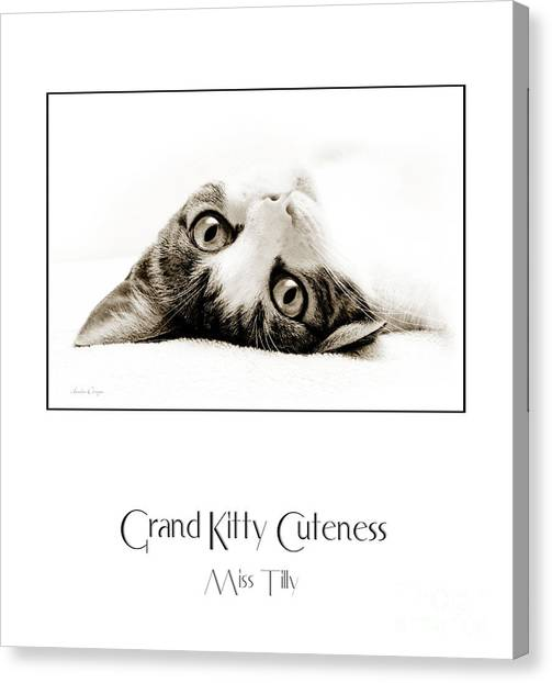 Andee Design Cat Eyes Canvas Print - Grand Kitty Cuteness Miss Tilly Poster by Andee Design