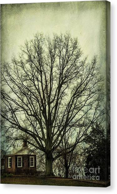 University Of Virginia Canvas Print - Grand Old Tree by Terry Rowe