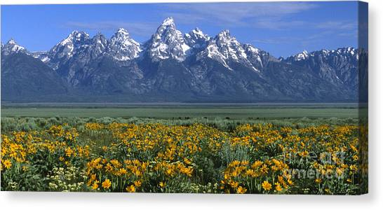 Grand Teton Summer Canvas Print
