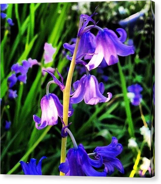 Grandma Canvas Print - #grandmas #garden #bluebells #flowers by Ann Singer