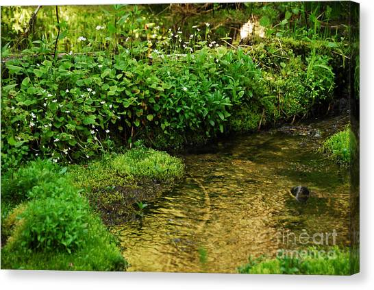 Granite Creek Canvas Print