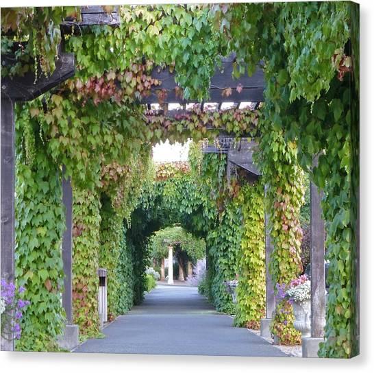 Grape Vine Covered Arbor Canvas Print