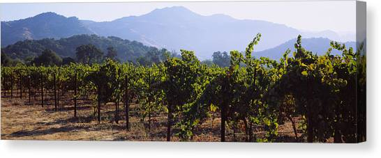 Vineyard In Napa Canvas Print - Grape Vines In A Vineyard, Napa Valley by Panoramic Images