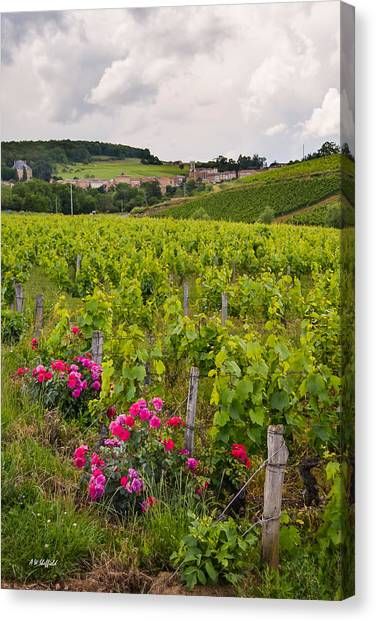 Oingt Canvas Print - Grapes And Roses by Allen Sheffield
