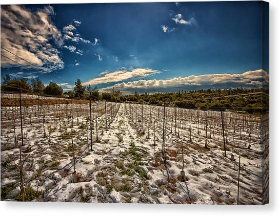 Grapes In Snow Canvas Print