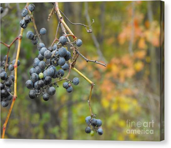 Grapes Left Canvas Print