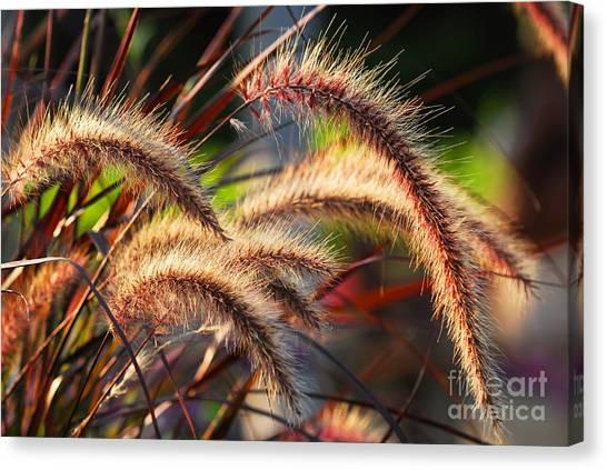 Field Canvas Print - Grass Ears by Elena Elisseeva