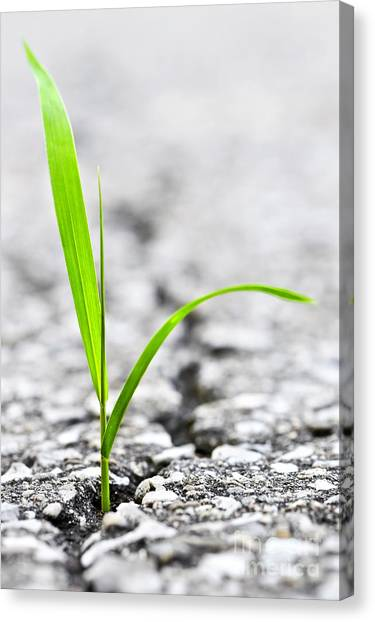 Garden Canvas Print - Grass In Asphalt by Elena Elisseeva