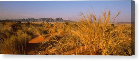 Namib Desert Canvas Print - Grass Growing In A Desert, Namib Rand by Panoramic Images