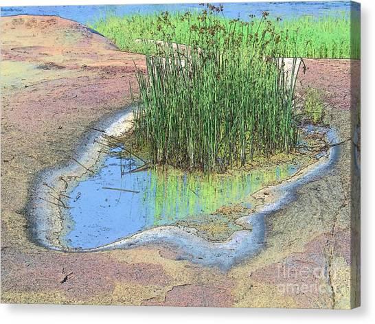 Grass Growing On Rocks Canvas Print