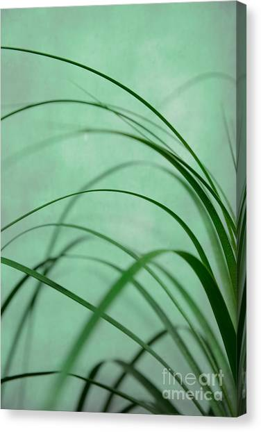 Grass Impression Canvas Print