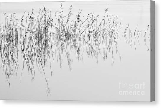 Grass In Lake Canvas Print