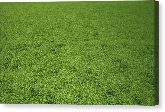 Grass Meadow, Artwork Canvas Print by Leonello Calvetti