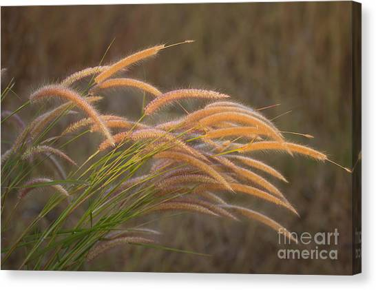 Grass Together In A Group Canvas Print