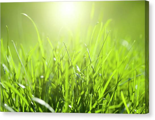 Blade Of Grass Canvas Print - Grass With Sunlight by Neoblues