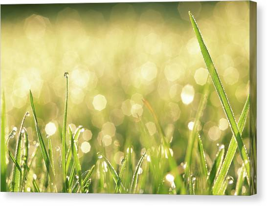 Blade Of Grass Canvas Print - Grass With Water Drops by Peter Cade