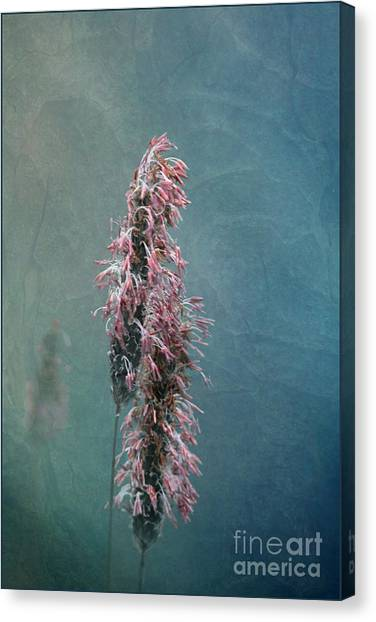 Grasses - Art By Nature Canvas Print