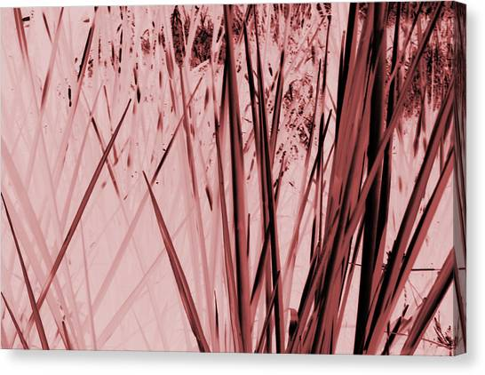 Grasses Canvas Print by Colleen Cannon