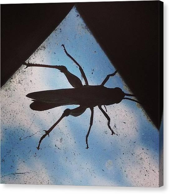 Grasshoppers Canvas Print - #grasshopper #jj #igers #rnd  #rostov by Denis Dynin