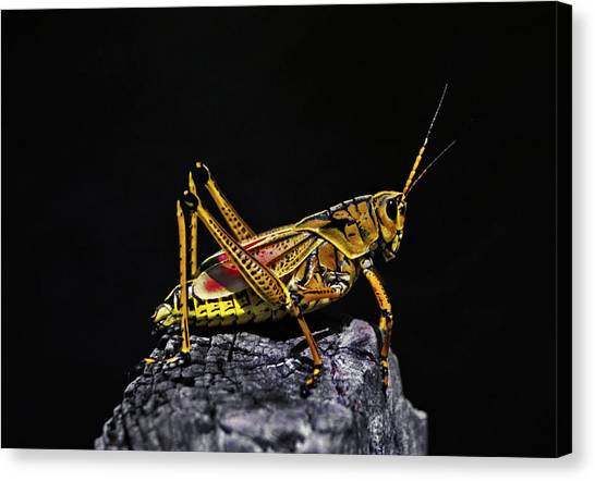 Grasshopper Portrait. Blue Cypress Lake Canvas Print