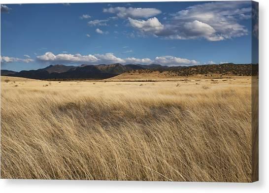 Grassland Expanse Canvas Print by Gregory Scott