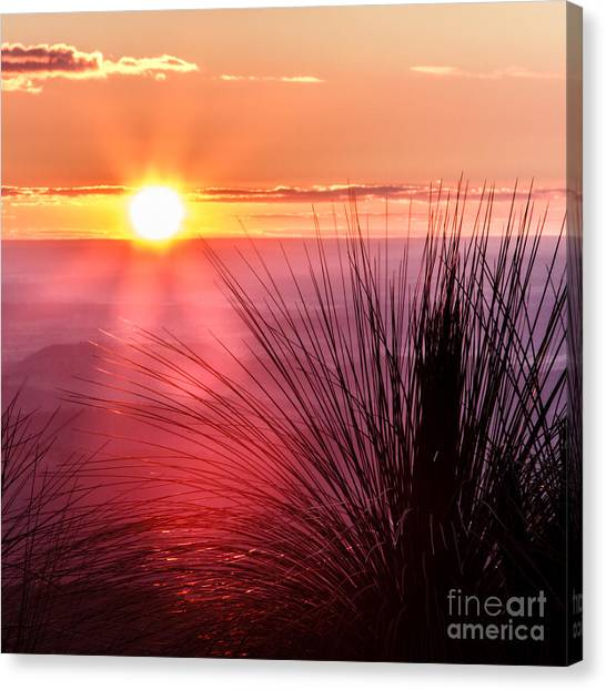 Grasstree Sunset Canvas Print