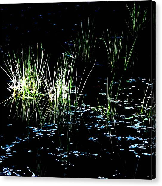Grassy Lights Canvas Print