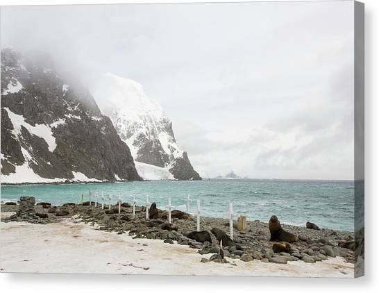 Argentinian Canvas Print - Graves And Antarctic Fur Seals by Ashley Cooper