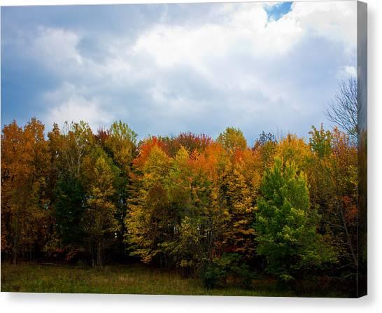 Gray Autumn  Canvas Print by Claus Siebenhaar