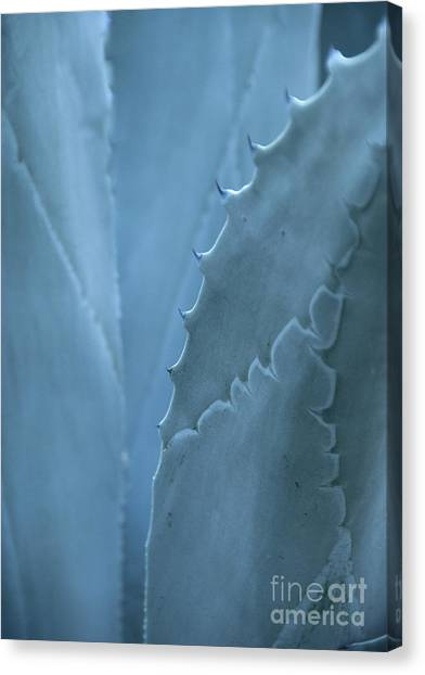 Gray-blue Patterns Canvas Print