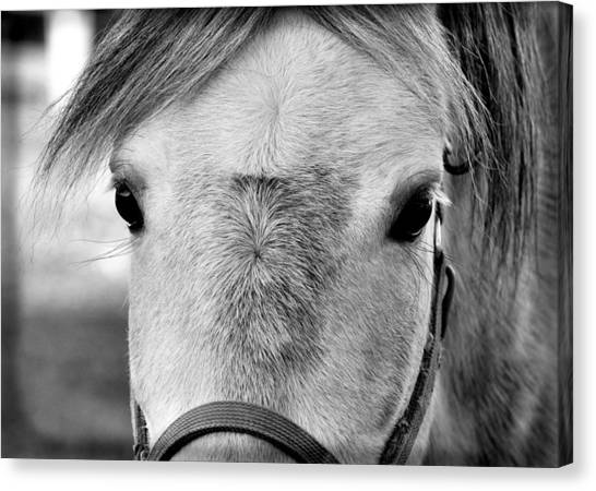 Gray On Gray Canvas Print by JAMART Photography