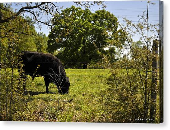 Grazing Alabama Canvas Print