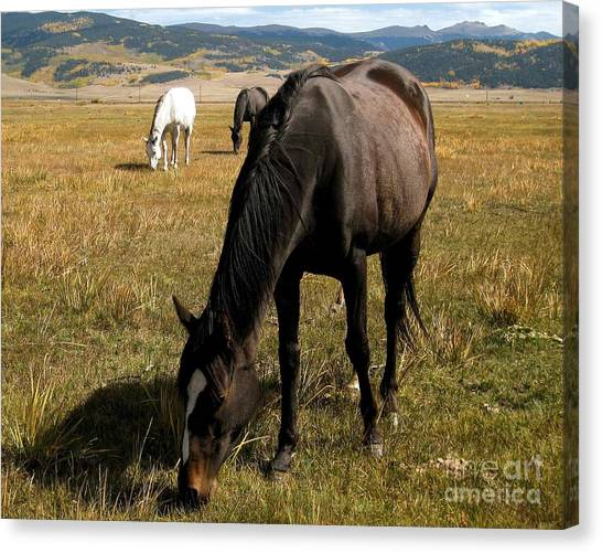 Grazing Buddies Canvas Print by Claudette Bujold-Poirier
