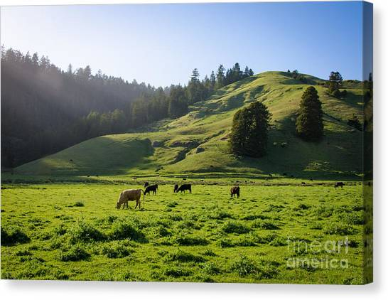 Grazing Hillside Canvas Print