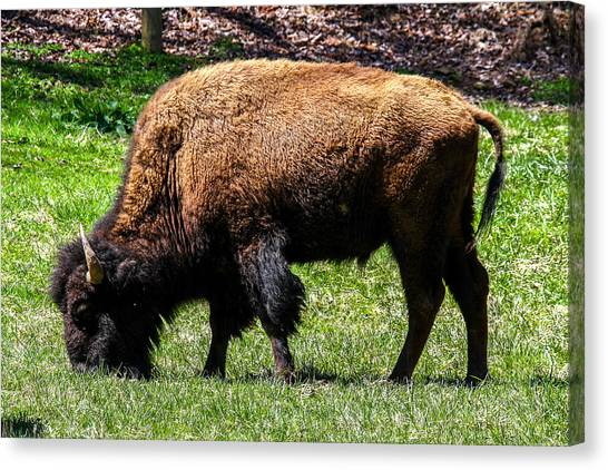 Canvas Print featuring the photograph Grazing In The Grass by Robert L Jackson