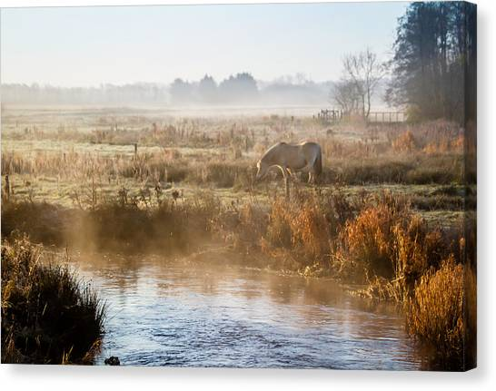 Grazing In The Mist Canvas Print