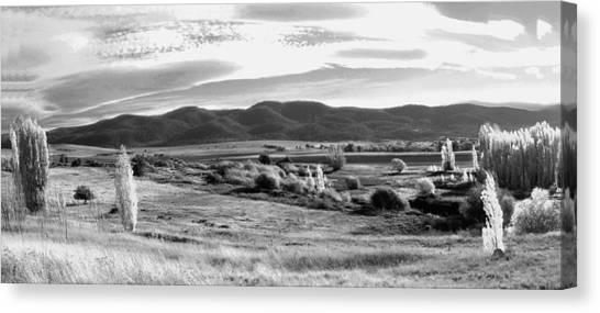 Grazing Land Near Goulburn In New South Wales Canvas Print