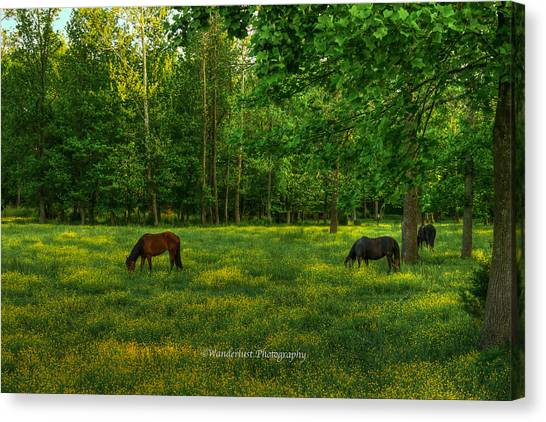 Grazing Canvas Print by Paul Herrmann
